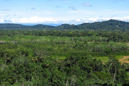 peru amazon: Amazon forest in the Madidi National Park, Bolivia Stock Photo