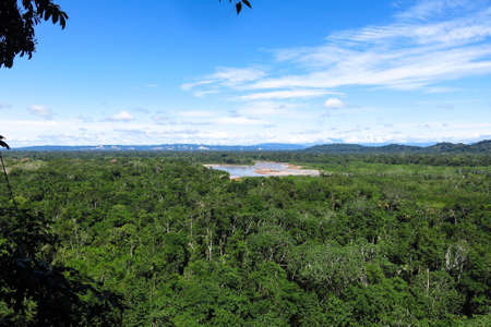 amazon forest: Amazon forest in the Madidi National Park, Bolivia Stock Photo