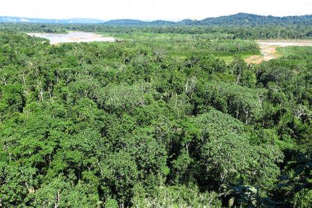マディディ国立公園、ボリビアのアマゾンの熱帯雨林