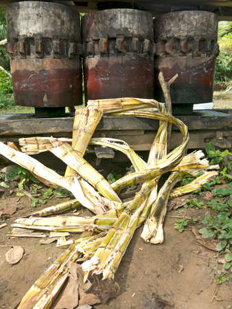 tropics: Old trapiche to squeeze sugarcane. Bolivian tropics.