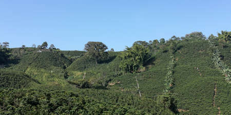 antioquia: The Coffee Belt, also called Coffee Triangle is a topographic region of Colombia, within its extension by the departments of Caldas, Risaralda, Quindio, Valle del Cauca, Antioquia and Tolima.