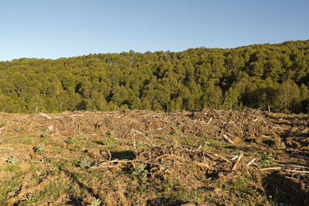 timber industry: Deforestation in the Chilean Andes. Timber industry is the most important in the country.