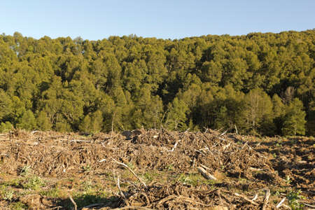chilean: Deforestation in the Chilean Andes. Timber industry is the most important in the country.