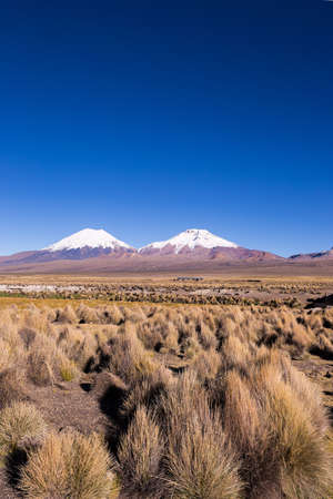 puna: Parinacota and Pomerade volcanos. High Andean landscape in the Andes. High Andean tundra landscape in the mountains of the Andes. The weather Andean Highlands Puna grassland ecoregion, of the montane grasslands and shrublands biome.