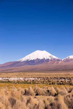 puna: Parinacota volcano. High Andean landscape in the Andes. High Andean tundra landscape in the mountains of the Andes. The weather Andean Highlands Puna grassland ecoregion, of the montane grasslands and shrublands biome.