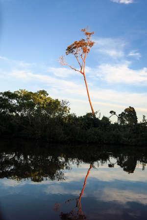 dawning: Yacuma river. Bolivian jungle. Amazon.