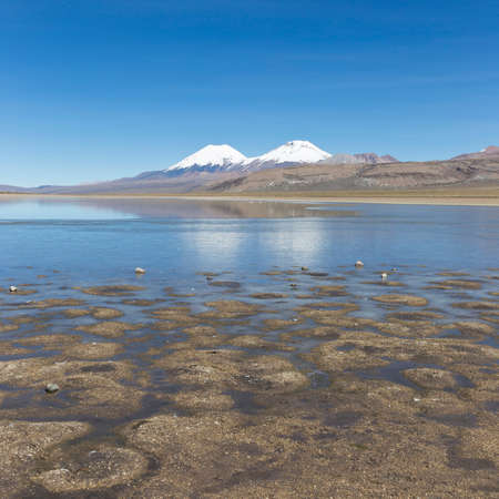 sajama: The snowcapped volcanoes Parinacota and Pomerane. Sajama National Park, on the border between Bolivia and Chile over 4500 meters. Range of the Andes.