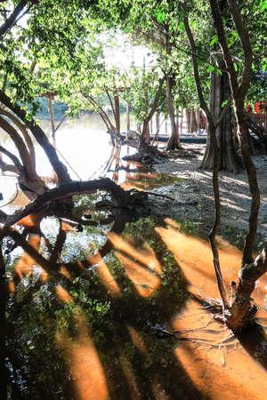 dawning: Yacuma river. Bolivian jungle. Bolivian Amazon