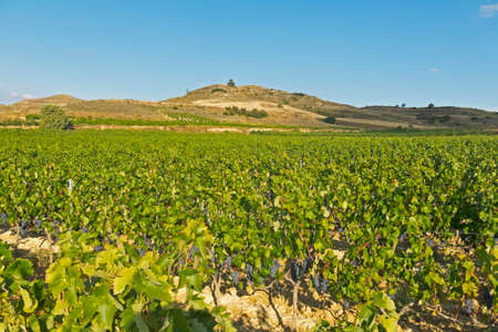 La Rioja vineyard fields by The Way of Saint James in Logrono