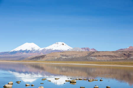 A flamingo fly with the snowcapped volcanoes Parinacota and Pomerane the background. Sajama National Park, on the border between Bolivia and Chile over 4500 meters. Range of the Andes.