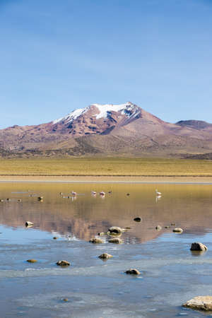 sajama: Flamingos on lake Huay�acota with the snowcapped volcano Anallajchi the background. Sajama National Park, on the border between Bolivia and Chile over 4500 meters. Andean Mountains Stock Photo