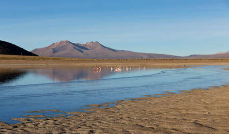 A group of Flamingos in the lagoon Huayñacota in the Natural Park of Sajama, on the border between Bolivia and Chile over 4500 meters. Andean Mountains are.