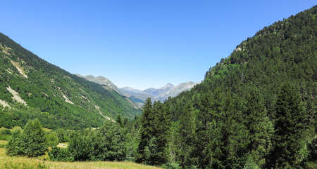 aran: Forest of Aran valley in the Catalan Pyrenees, Spain