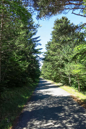 Road of Forest in Aran valley, the Catalan Pyrenees, Spain Stock Photo