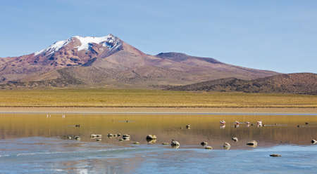Flamingos on lake Huayñacota with the snowcapped volcano Anallajchi the background. Sajama National Park, on the border between Bolivia and Chile over 4500 meters. Andean Mountains
