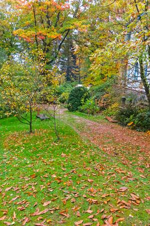 Germany, Hamburg, Autumn forest.  Autumn Impression from the Saxony forest near Hamburg, Germany