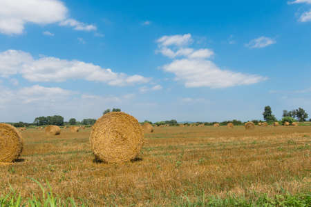 Typical landscape of the Emporda in Catalonia: Round bales of straw on a stubble field in Catalonia, Spain
