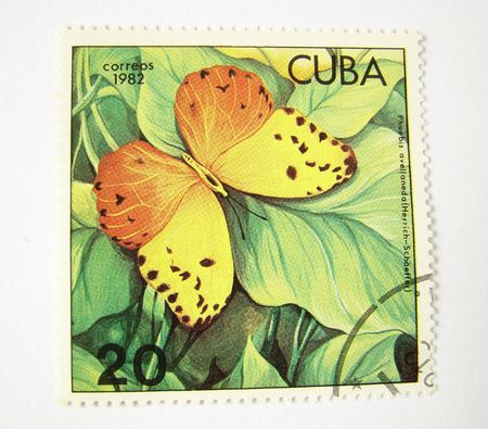 cuba butterfly: Cuba postage stamp with butterfly on white background