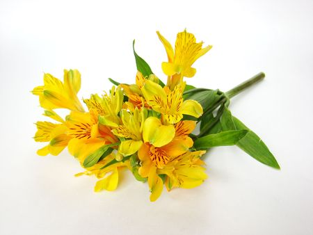 Bouquet of yellow Alstroemeria flowers isolated on white background                  Stock Photo - 3814157