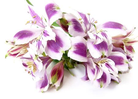 Bouquet of white and purple Alstroemerias on white background      Stock Photo