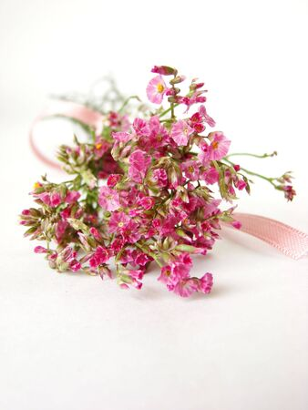 Bouquet of little pink flowers on white background - isolated               photo