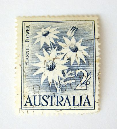 Australia postage stamp with flannel flowers on white background Stock Photo