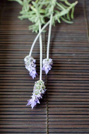 Lavender flowers over dark wood background