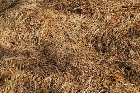 Heap of silage, hay straw for stock feed on sunny day