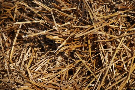 Hay straw for stock feed on sunny day Stock Photo