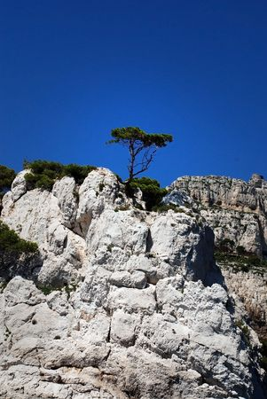 Lonely tree on the rock at calanque between Marseille and Cassis, France photo