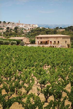 vineyard in Provence, France with  village on back photo