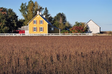 Yellow house in farm  and soy beans field photo