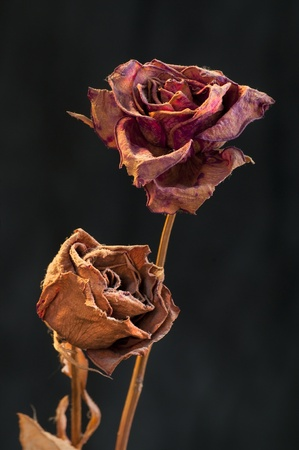 leave: A wilting rose signifies lost love, divorce, or a bad relationship Stock Photo