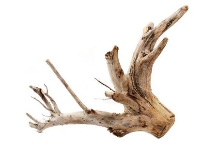白い背景の上の流木木の切り株