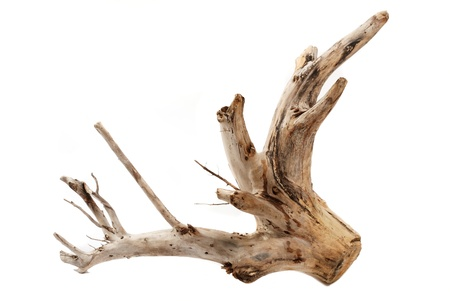 Driftwood tree stump on white background