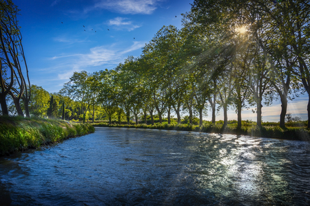 View of the plane trees on the edge of Canal du Midi in southern France prèes Carcassonne Stock Photo