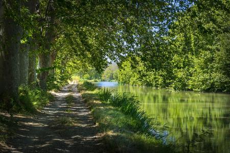 arbres: Vue du Chemin de hallage sur le bord du Canal du Midi