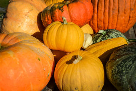 Group of squash, pumpkins and vegetables outdoors at autumn in Quebec