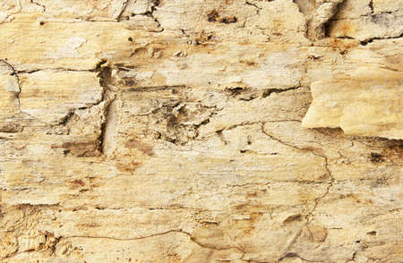Old grungy wooden background Stock Photo - 13308664
