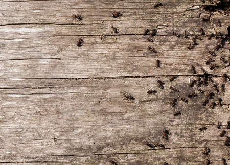 Ants in a forest on old timber Stock Photo