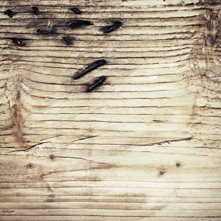 Old wooden board with branch ant rusty nails photo