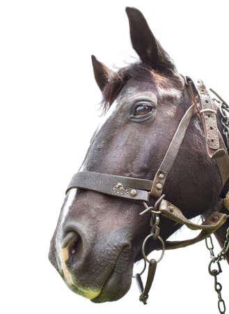 Horse head on white background