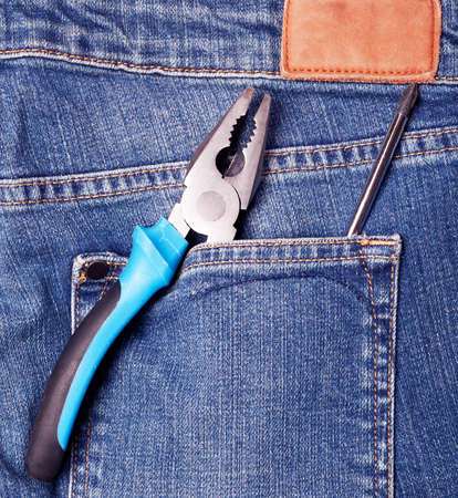 nipper: Nipper in blue jeans pocket