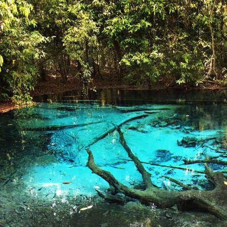 krabi: Emerald pool in krabi Thailand