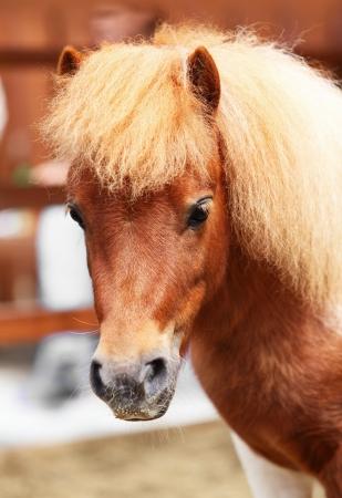 Brow miniature horse  Outdoors photo
