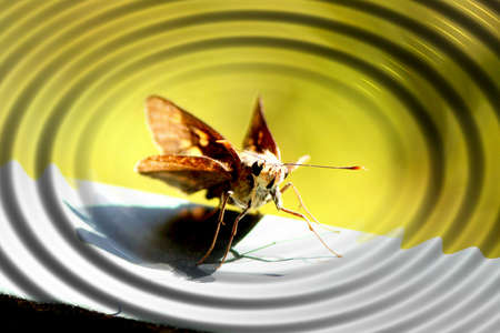 ripple effect: Ripple effect background design incorporating on Skipper Butterfly