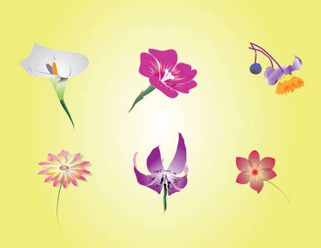 Beautyful einzigartigen wilden Blumen Standard-Bild - 15115390