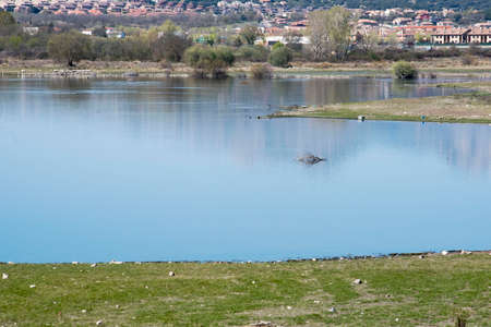 The reservoir of Pedrezuela or Vellón, located in Guadalix de la Sierra. Madrid's community. Spain.