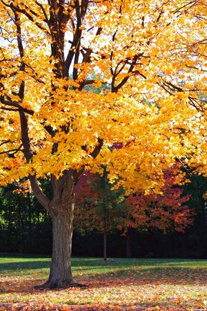 Colorful Autumn Foliage in the Park Stock Photo - 3212313