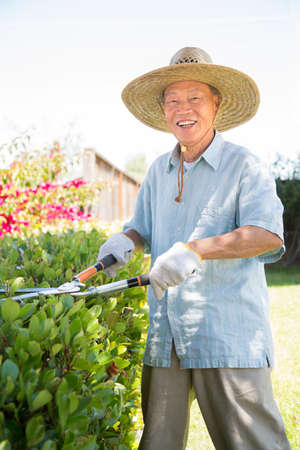 Senior Asian Gardener Working in Garden Holding Cutter in Summer photo